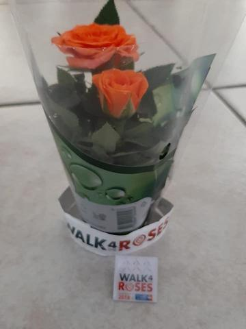 Walk 4 The Roses 01-09-2019